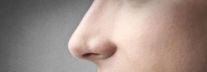 Funktonen der Nase